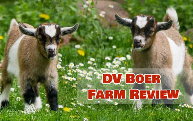 DV Boer Farm Review: Earn Passive Income as a Paiwi Program Partner